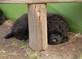 souboje na zahradě unaví