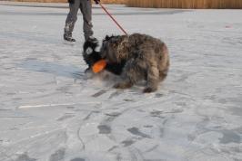 na ledu
