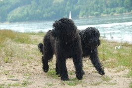 kdo je máma a kdo štěně?   (Arda a Annie)
