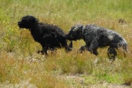 honička mokrých psů (Arda a Artů)