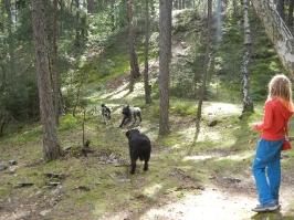 honička v lese