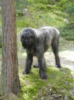 mokrý pes - Artů